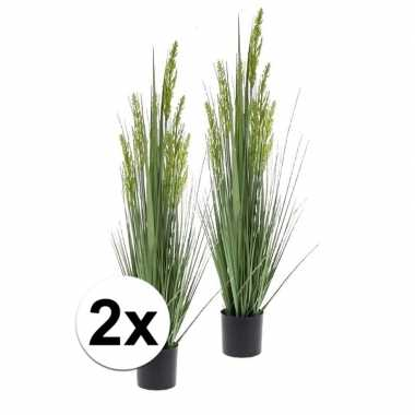 2x gras nepplant in pot 90 cm