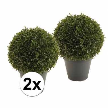 2x ronde buxus nepplant 35 cm
