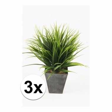 3x gras nepplant in pot 30 cm