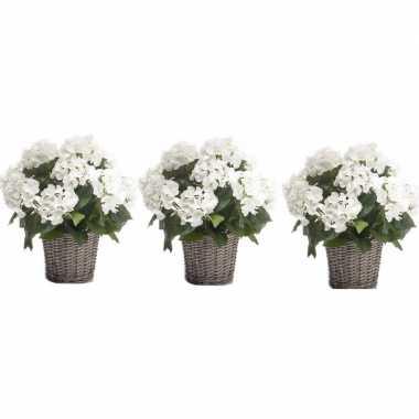 3x nep hortensia plant wit in rieten mand kunstplant