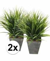 2x gras nepplant in pot 30 cm
